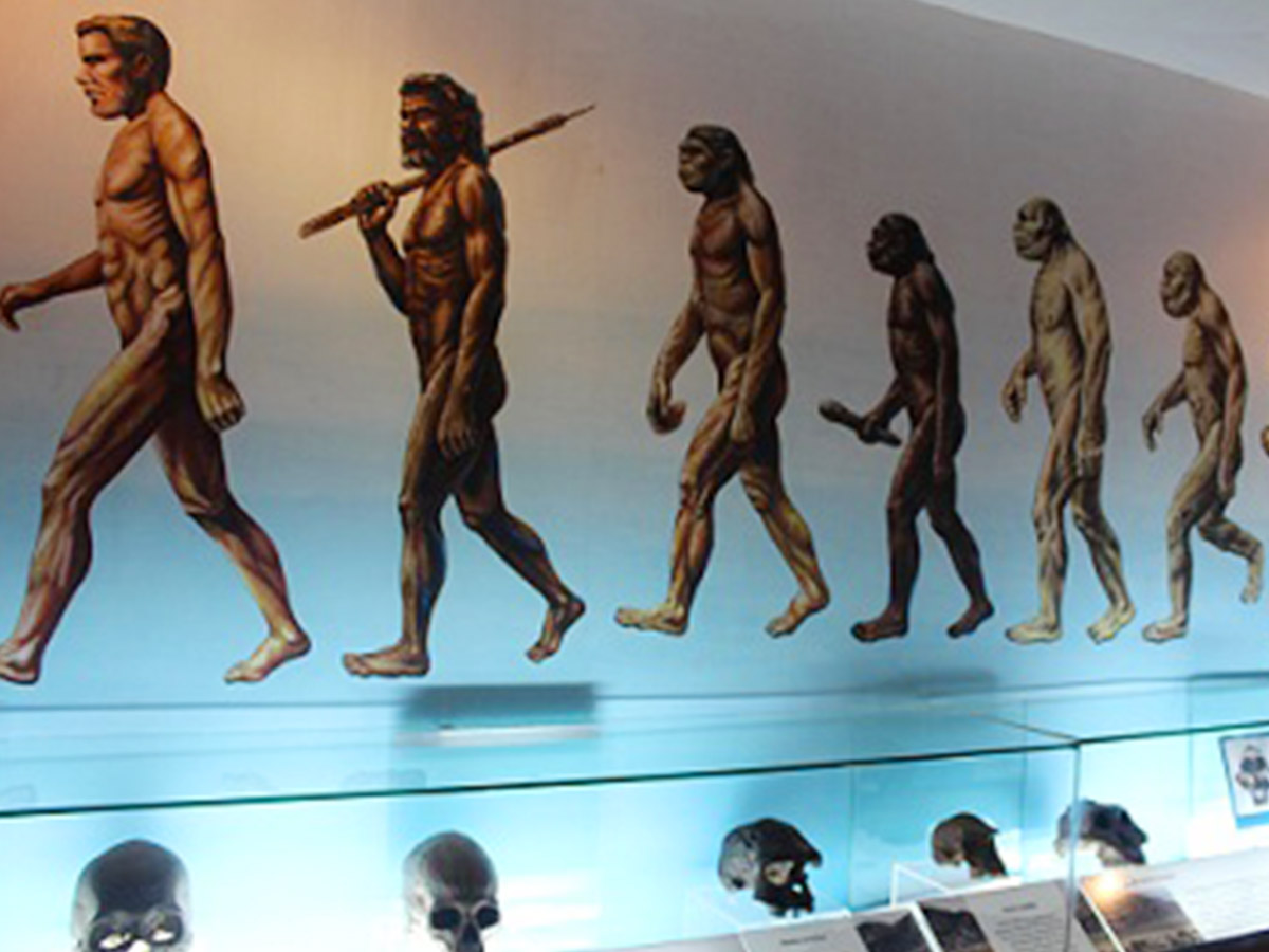 display homo erectus di museum sangiran