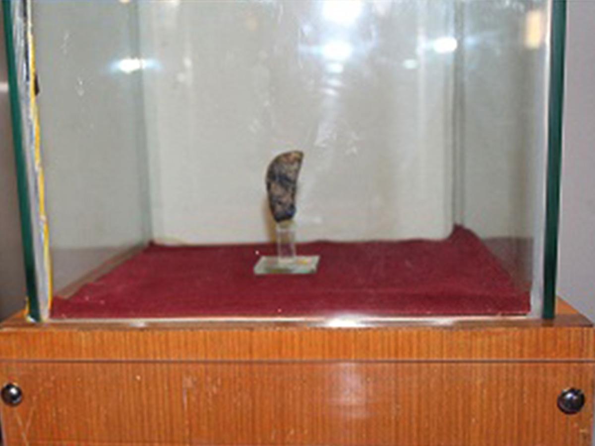 textite museum sangiran purbakala