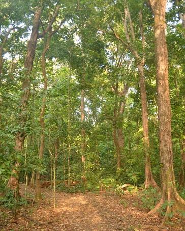 hutan peucang1