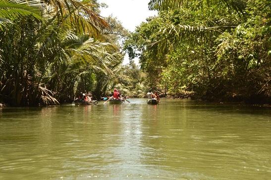 hutan tropis2