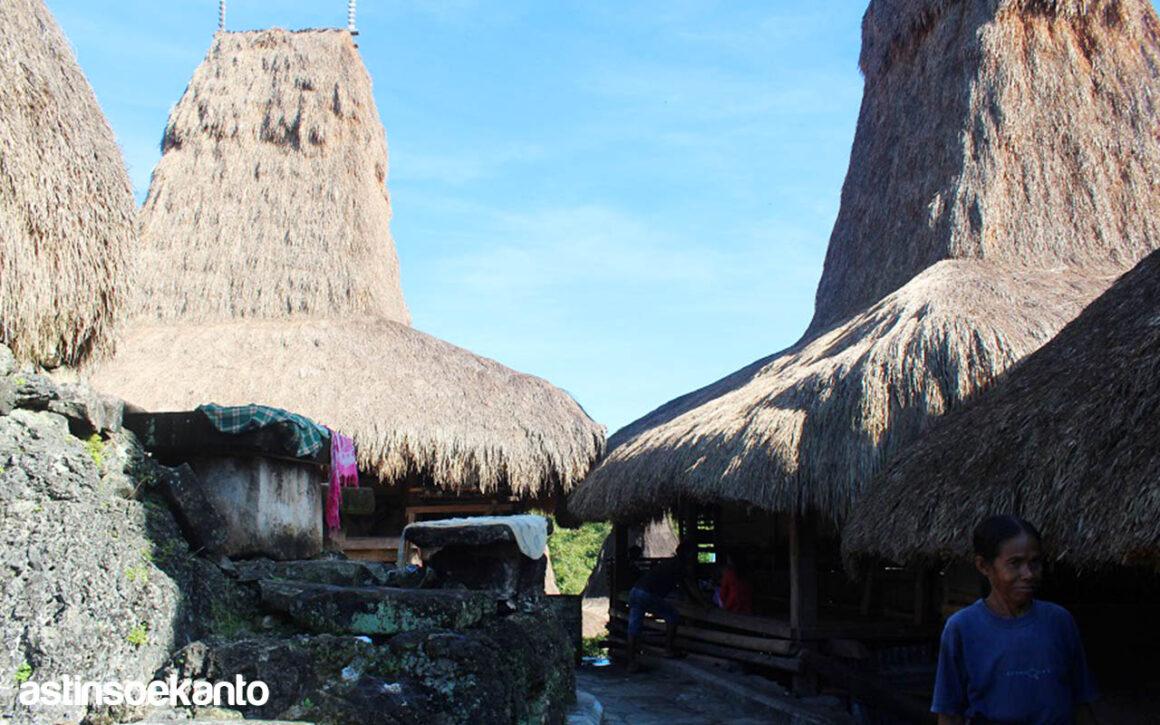 Kampung Adat Tarung Sumba