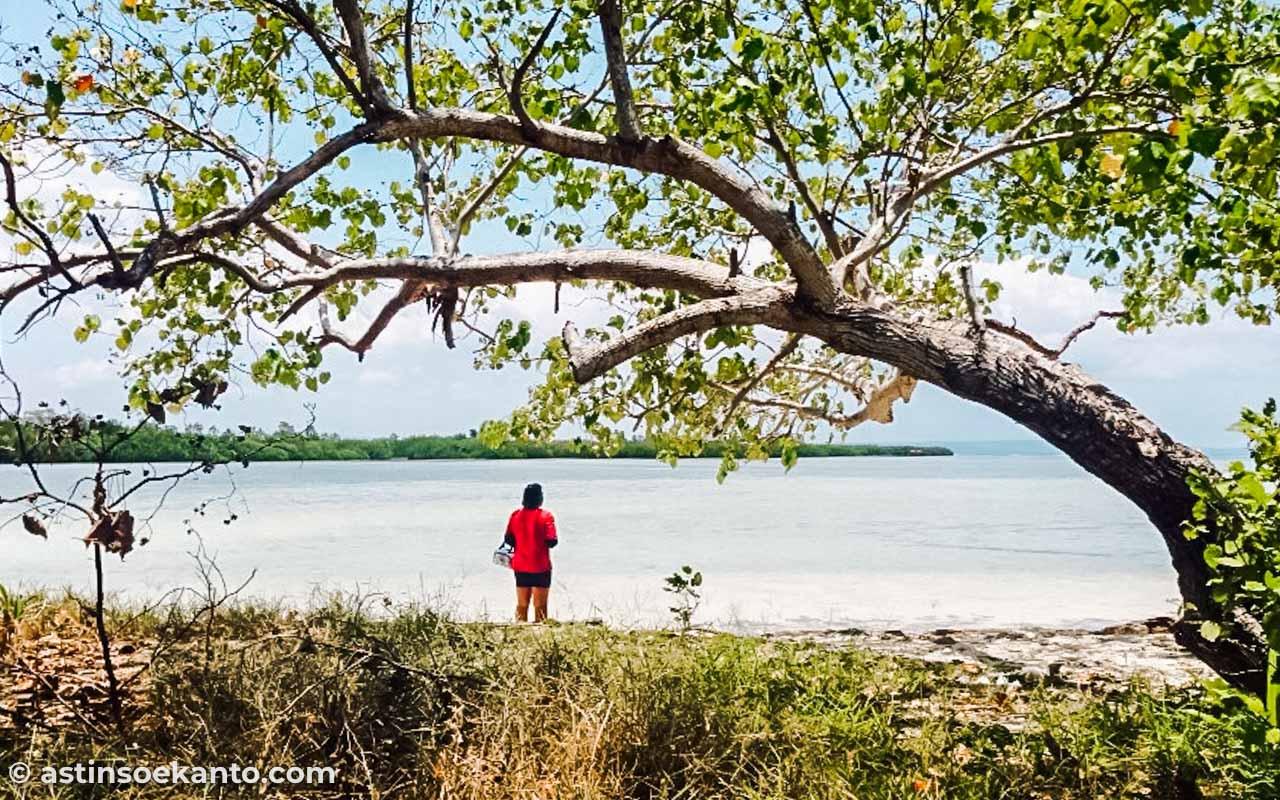 Lokasi Pulau Raja Maluku
