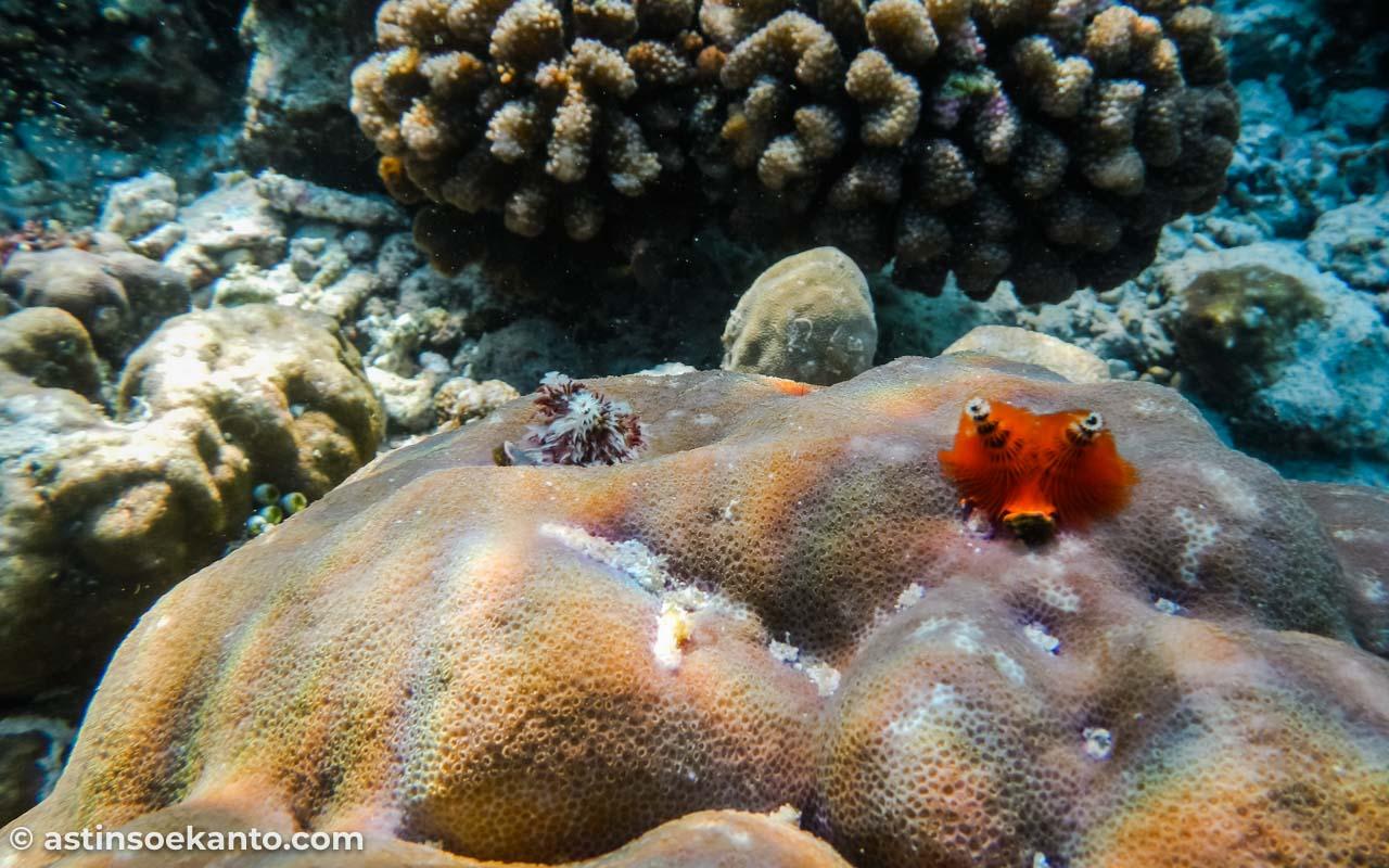Kehidupan yang indah di bawah Laut Nusa Telu