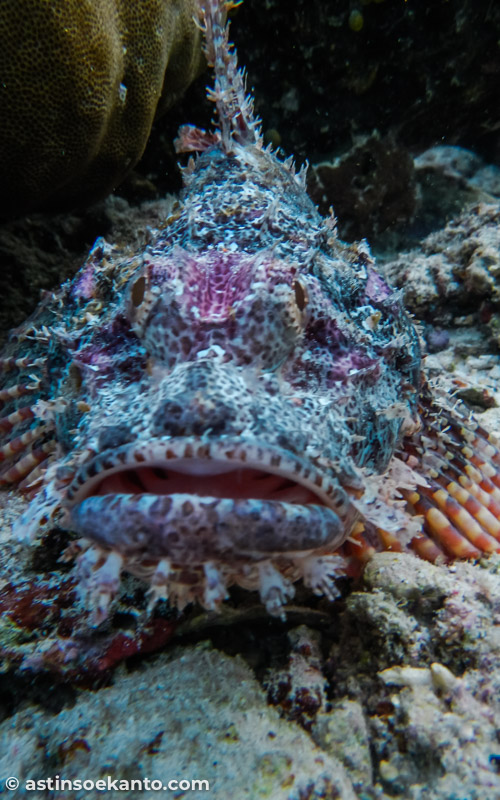 Salah satu penghuni bawah laut Nusa Telu