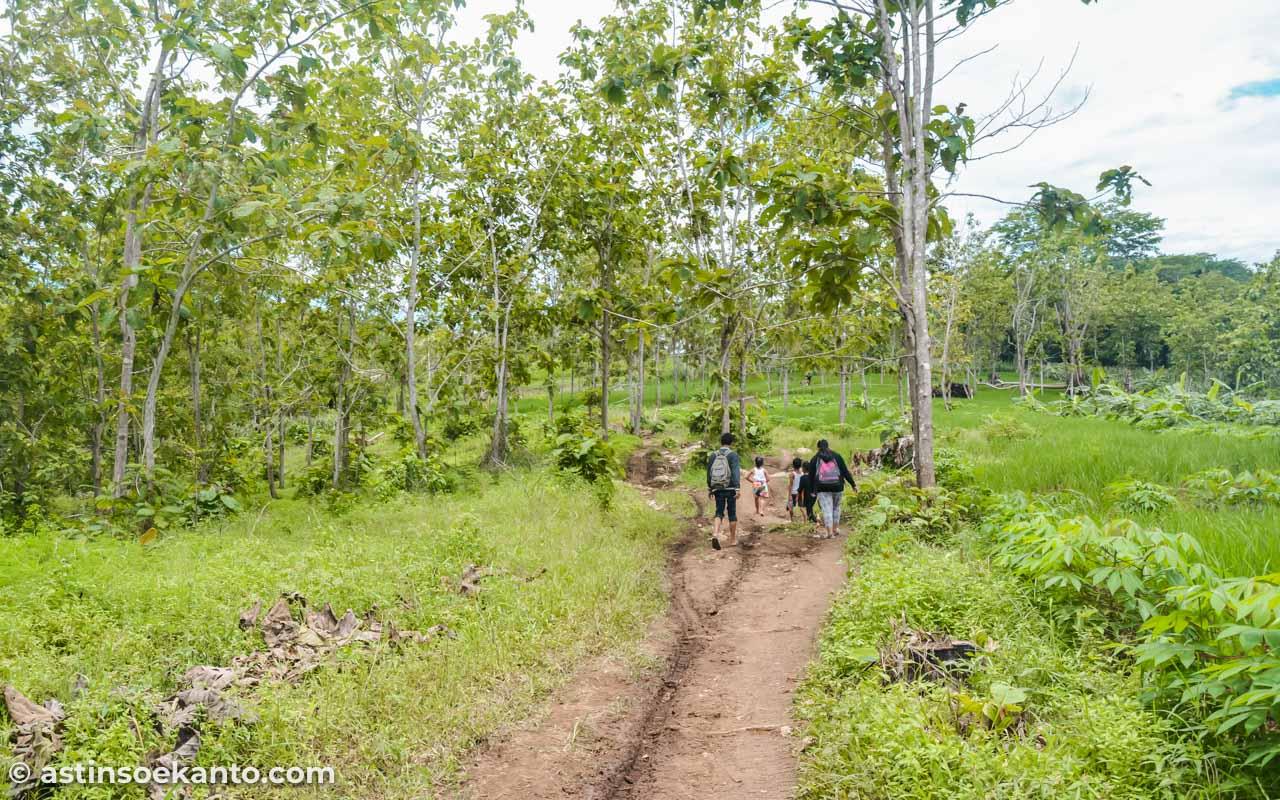 Selain kebun jagung, hutan jati juga akan kita lewati menuju Pantai Coro Tulungagung
