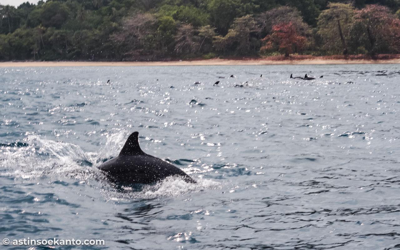 Susah sekali mengabadikan lumba yang menari-nari itu :(